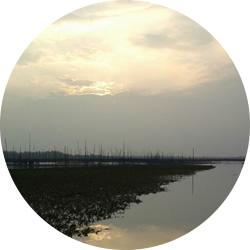 黃河口大閘蟹